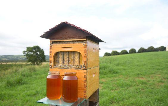 arı kovanları nasıl açılır