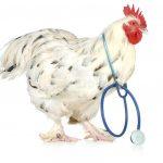 tavuk hastalıkları