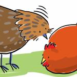 tavuklarda gagalama