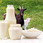 Keçiler Ne Sıklıkla Sağılır?