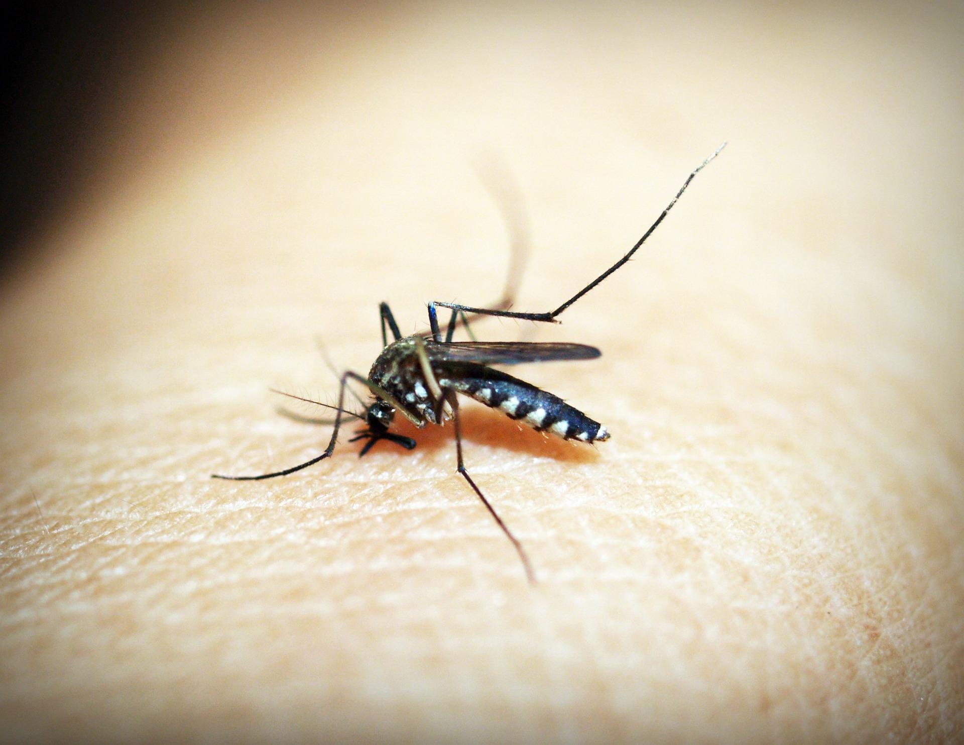 böcek ısırınca ne yapılır